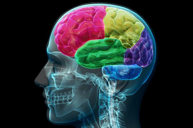 El ejercicio como factor protector del cerebro que envejece